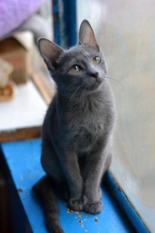 шикарна юна кішечка з шубкою-плюш 6м