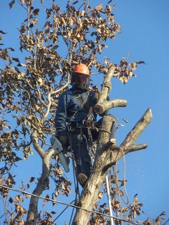 СПИЛ деревьев АЛЬПИНИСТами и с ВЫШКОЙ . Дробилка веток.