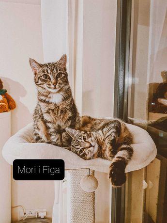 Kociaki do adopcji