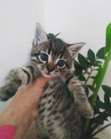 Кошеня-дівчинка в добрі руки