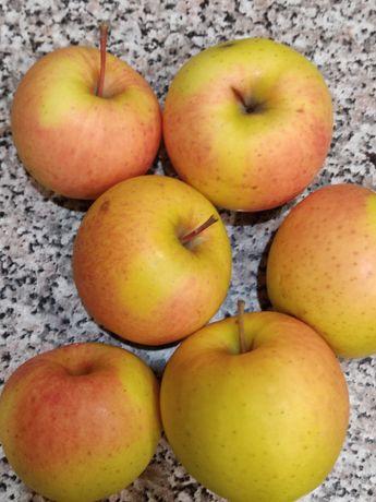 Яблоки грушевка домашняя