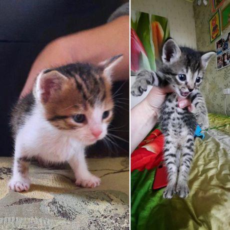 Котята ищут семьи! Им 1 месяц!