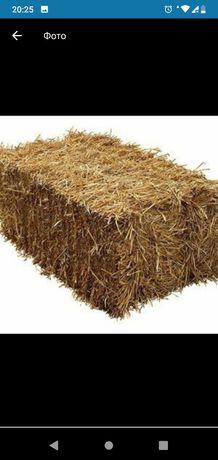 Солома,тюки пшеничні з травою..