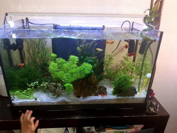 Varias plantas para aquario