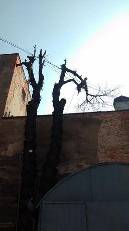 wycinka, pielęgnacja drzew także owocowych, cięcie żywopłotu