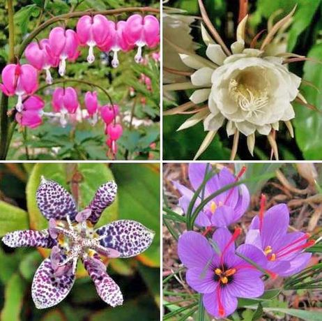 Sementes de Plantas Exóticas