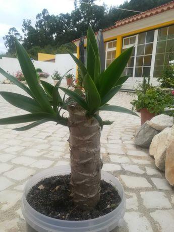 Várias plantas de diversos tamanhos no