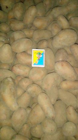 Картопля(насіння)