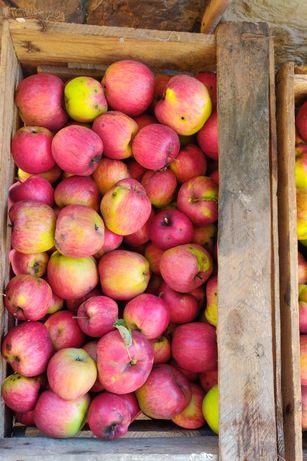 Яблука   домашні