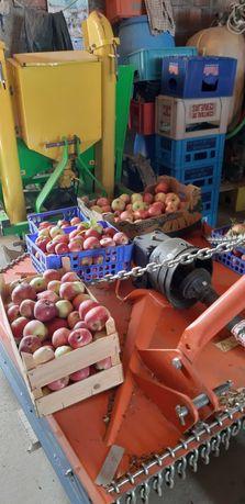 Fruta  Biológica Macâs Varias qualidades