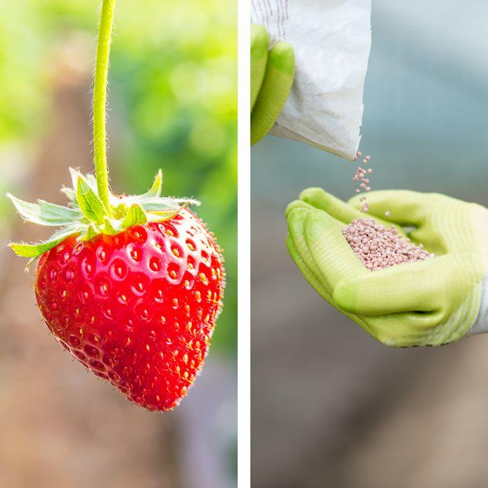 Hidroponia - Nutrientes Frutos Fase Frutificação - Loja Oficial Marvila - imagem 1
