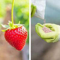 Hidroponia - Nutrientes Frutos Fase Frutificação - Loja Oficial