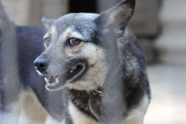 Самые лучшие собаки в приюте Счастливый Пёс!
