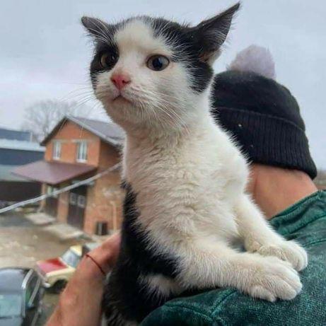 Гарненька кішечка шукає дім! 3 місяці. Стерилізація безкоштовна!