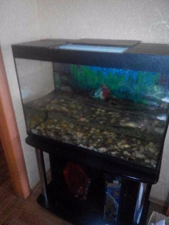 Продаю аквариум (емкость 150 л.)