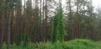 Вихід в ліс, Миколаївка, 11 га, ОСГ. Супермісце!