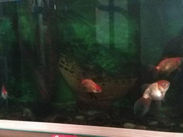 Аквариум с рыбками и всеми принадлежностями!