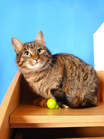 Ласковые полосочки ищут дом, отдам полосатую кошку