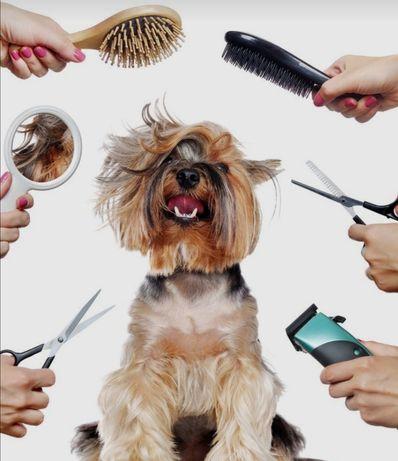 Шукаю моделей на БЕЗКОШТОВНУ стрижку собак та котів!