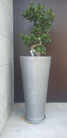 Bonsai grande em vaso