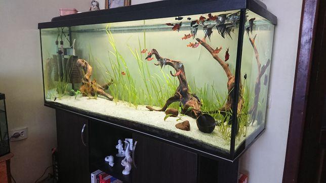 Продам аквариум полный комплект 450л