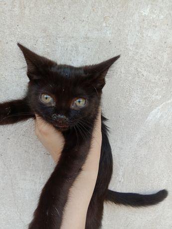 Срочно! Котята в хорошие руки бесплатно. Котенок даром. Котики.