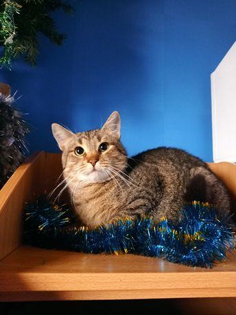 Полосатый красавец кот