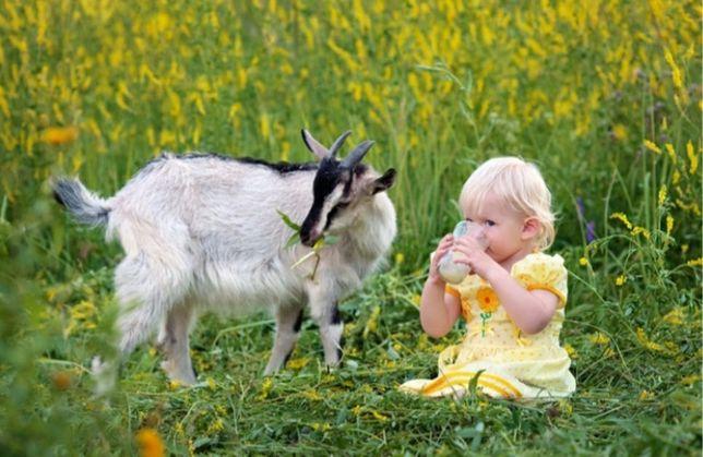 Козье молоко и творог! (Продукты здоровья) Думаем о здоровье близких