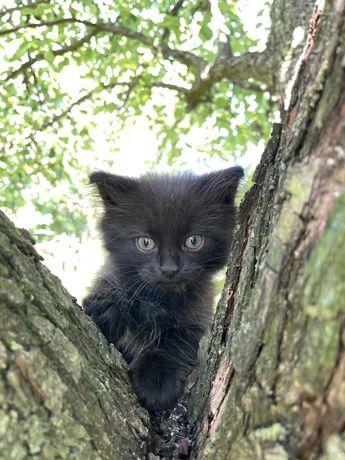 Кошенята чорні хлопчик і дівчинка
