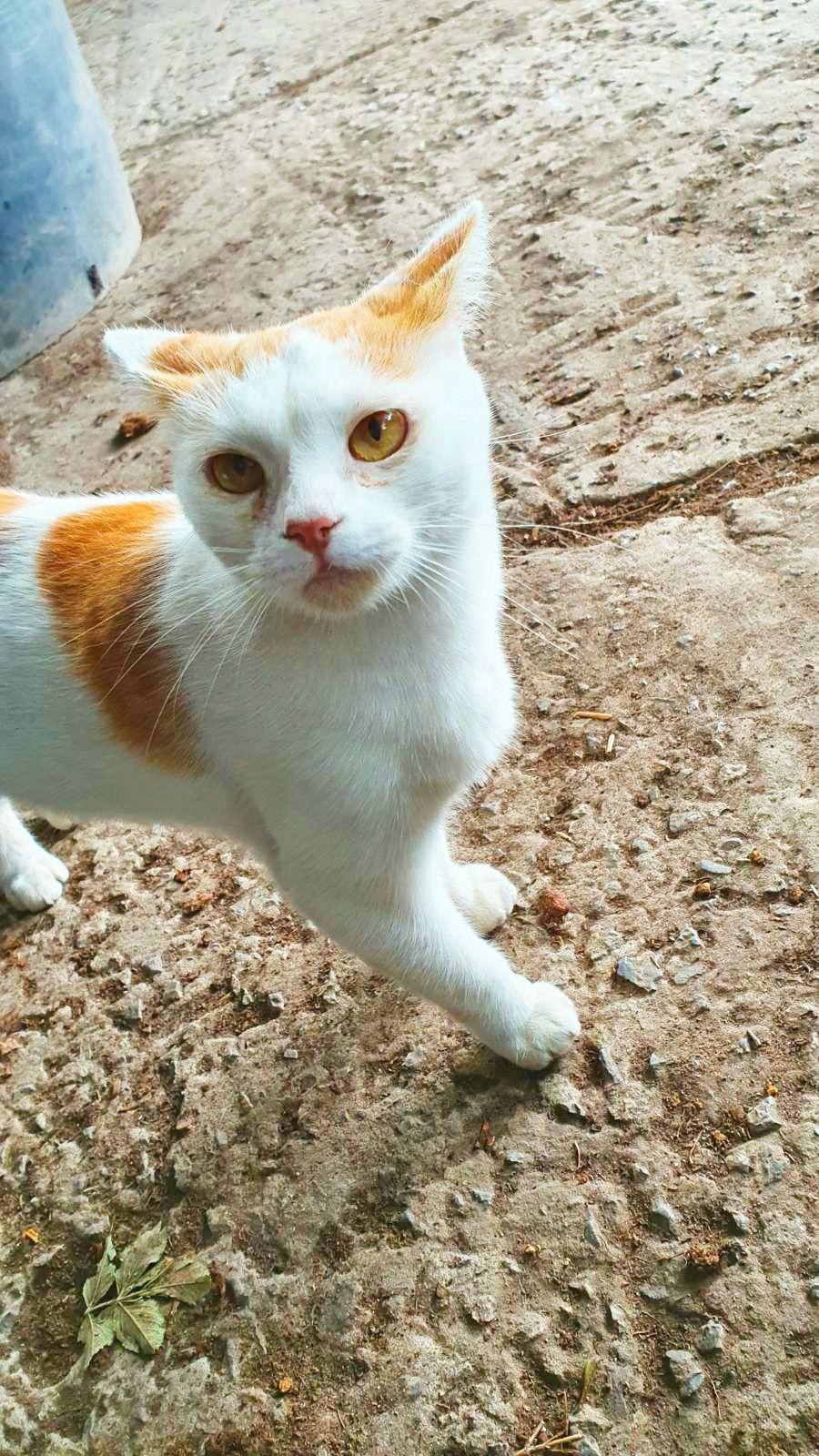 Киця кішка кіт кошеня Стерилізована