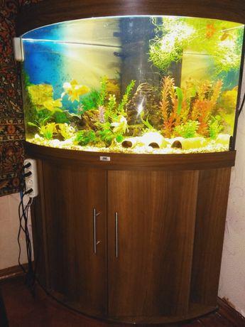 Угловой аквариум, аквариум Juwel Trigon 190