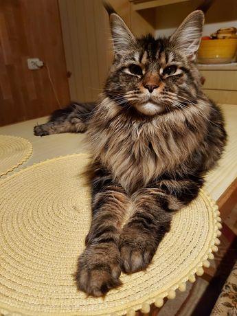Zaginął kot Włocławek Południe