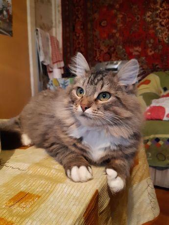 Обаятельный котик Борька нуждается в новой семье