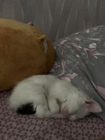 Отдам котенка девочку 3 месяца