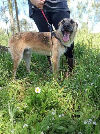 Timon- Cachorro de porte médio/pequeno para adoção