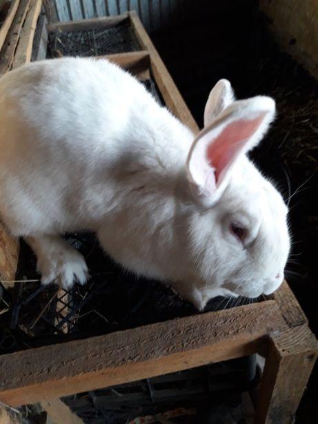 Продам кроликов разных пород.