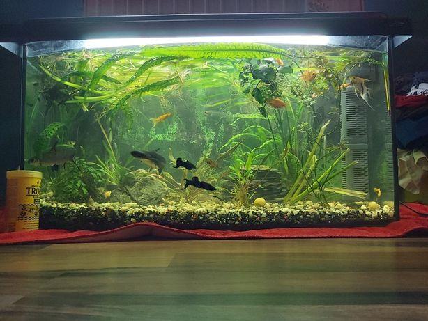 Akwarium profilowane 112L z pokrywą