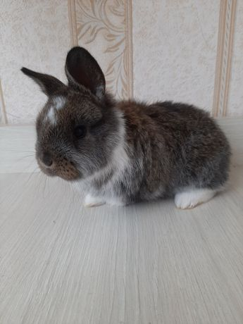 Продам Кролики !