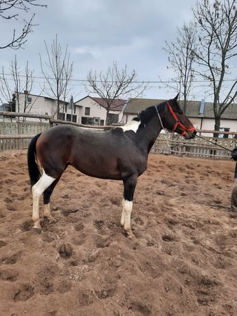 Konie Lądek Rekreacja Sport