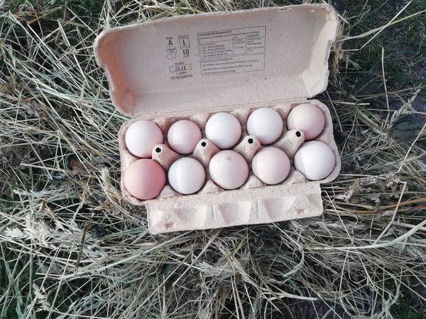Jaja z chodowli ekologicznej