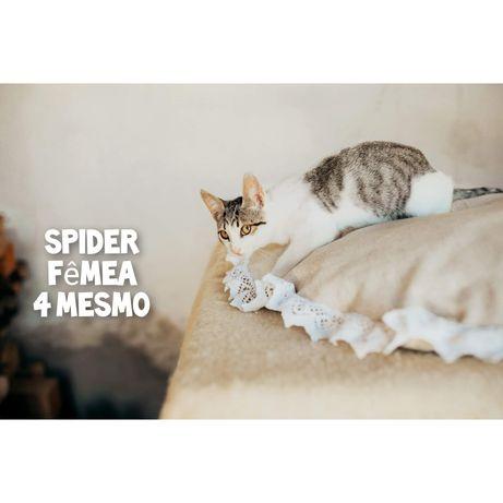 Spider- gatinha bebe para adoção muito meiga.