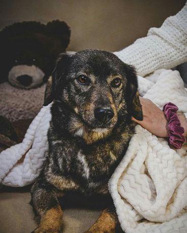 Kochany i mądry psiak szuka wymarzonej Rodziny! Adoptuj!