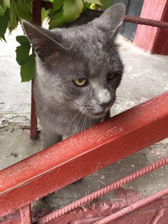 Котик ответственным людям