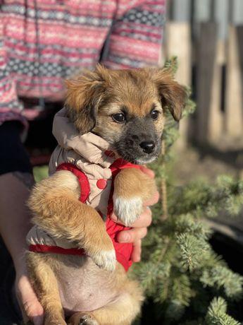 Подарю красивого щенка 2 месяца