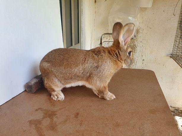 Vendo coelhos  hibridos