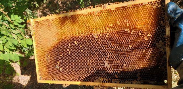 Сушь пчелиная. Рамка рута.