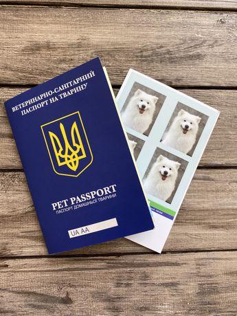 Документи для виїзду за кордон, тварини. Собаки та кішки.