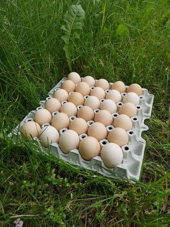 Jaja wiejskie z własnego gospodarstwa