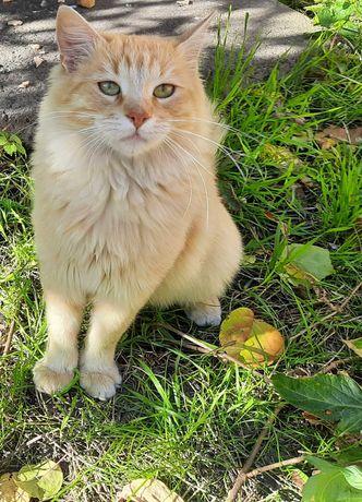 Котик ,  мальчик, рыжее чудо