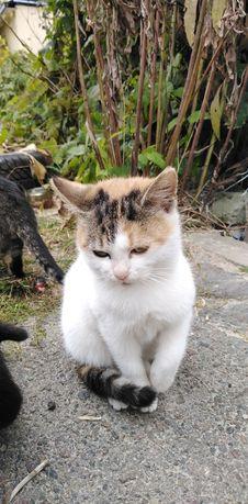 Безпритульні кошенята